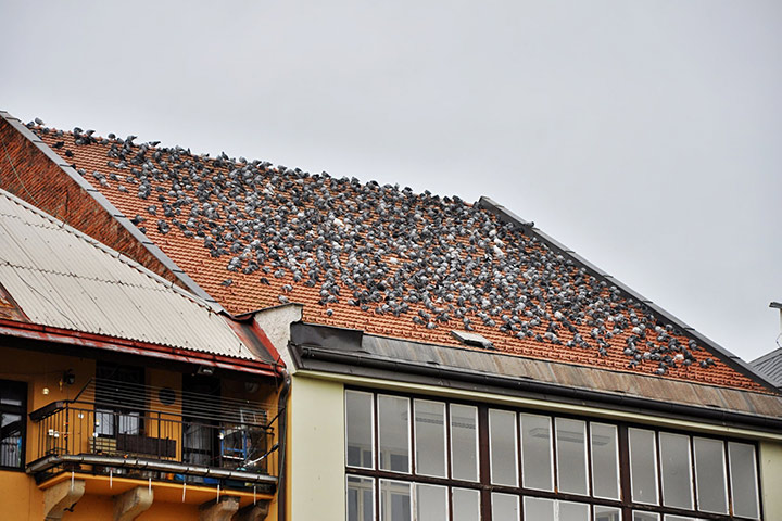 A2B Pest Control are able to install spikes to deter birds from roofs in Dalston.