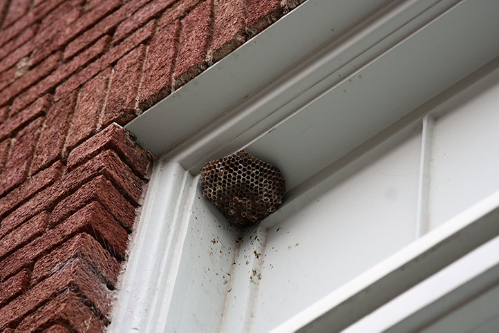 We provide a wasp nest removal service for domestic and commercial properties in Dalston.